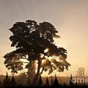 Silhouetted Tree With Sun Rays Art Print