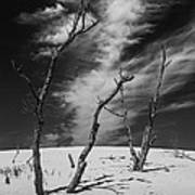 Silver Lake Dune With Dead Trees And Cirrus Clouds In Black And White Art Print
