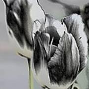 Silver Tulips Art Print