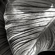 Silvertone Leaf Art Print