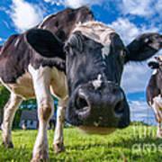 Simply Cows Art Print