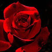 Simply Red Rose Art Print