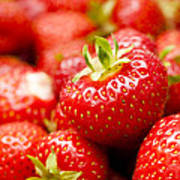Simply Strawberries Print by Anne Gilbert