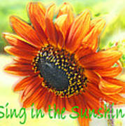 Sing In The Sunshine Art Print