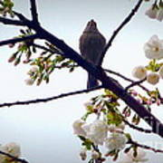 Singing Of Spring Art Print