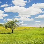 Single Apple Tree In Maine Blueberry Field Art Print