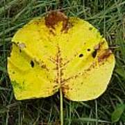 Single Leaf Art Print
