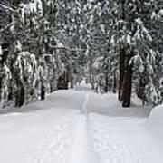 Single Track Cross Country Skiing Trail Yosemite National Park Art Print