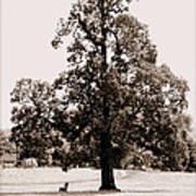 Single Tree Journey Art Print