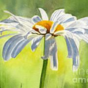 Single White Daisy Blossom Art Print by Sharon Freeman