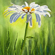 Single White Daisy  Art Print