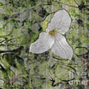 Single White Trillium Art Print
