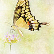 Sipping Nectar Art Print