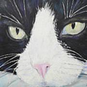 Sissi The Cat 2 Art Print