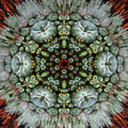 Sister Cactus Mandala Art Print