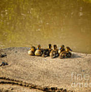 Six Ducklings In A Row Art Print