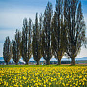 Skagit Trees Art Print