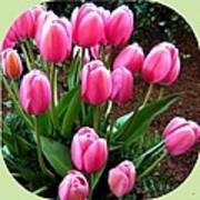 Skagit Valley Tulips 9 Art Print