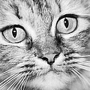 Skc 1498 Wide Eyed Art Print