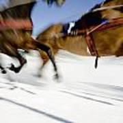 Ski Joring Race Art Print