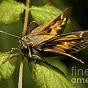 Skipper Moth Art Print