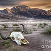 Skull In The Desert Art Print