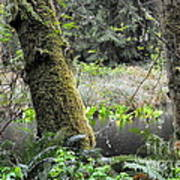 Skunk Cabbage Blooming In Washington State Forest  3 Art Print