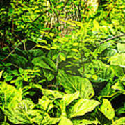 Skunk Cabbage Thicket Art Print