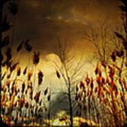 Autumn Lights Sky Colors  Art Print