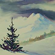 Sky Shadows And Spruce Art Print