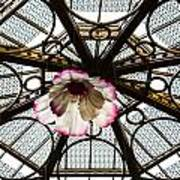 Skylight Blossom Art Print