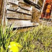 Slash Of Spring Art Print