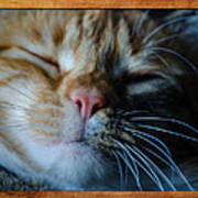 Sleeping Abby Framed Art Print