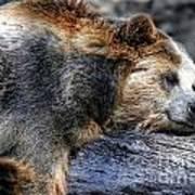 Sleeping Bear Art Print