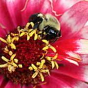 Sleeping Bumble Bee Art Print
