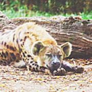Sleeping Hyena Art Print