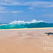 Sleeping Monk Seal At Papohaku Beach In Molokai Hawaii  Art Print