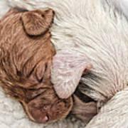 Sleeping Puppies Art Print