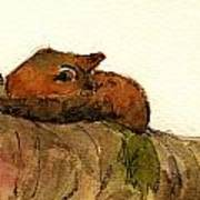 Sleeping Red Fox Art Print