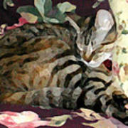 Sleeping Tabby Art Print