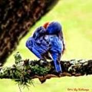 Sleepy Bluebird Art Print