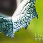 Slice Of Leaf Art Print
