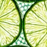 Slices Of Lemon. Art Print