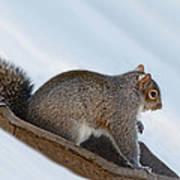 Sliding Squirrel Art Print
