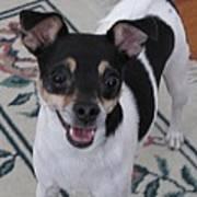 Small Dog Big Smile Art Print