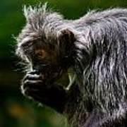 Small Monkey Eating Art Print