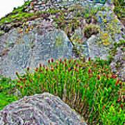 Smartweed Just Below Huayna Picchu's Peak-peru  Art Print