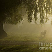 Smelly Goat In The Mist Art Print