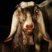 Smiling Egyptian Goat II Art Print