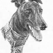 Smiling Greyhound Pencil Portrait Art Print